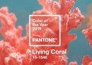 Живой коралл